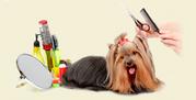 профессиональная стрижка собак